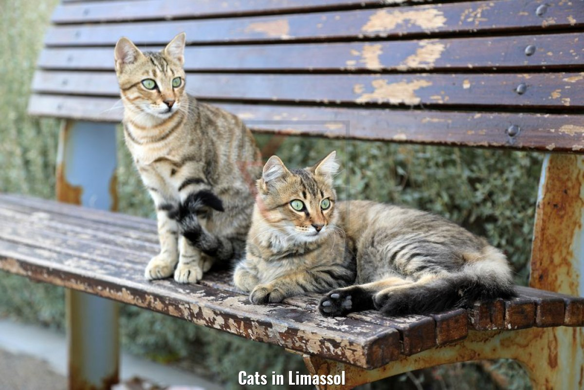Cats in Limassol
