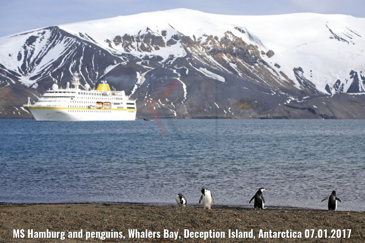 MS Hamburg and penguins, Whalers Bay, Deception Island, Antarctica 07.01.2017