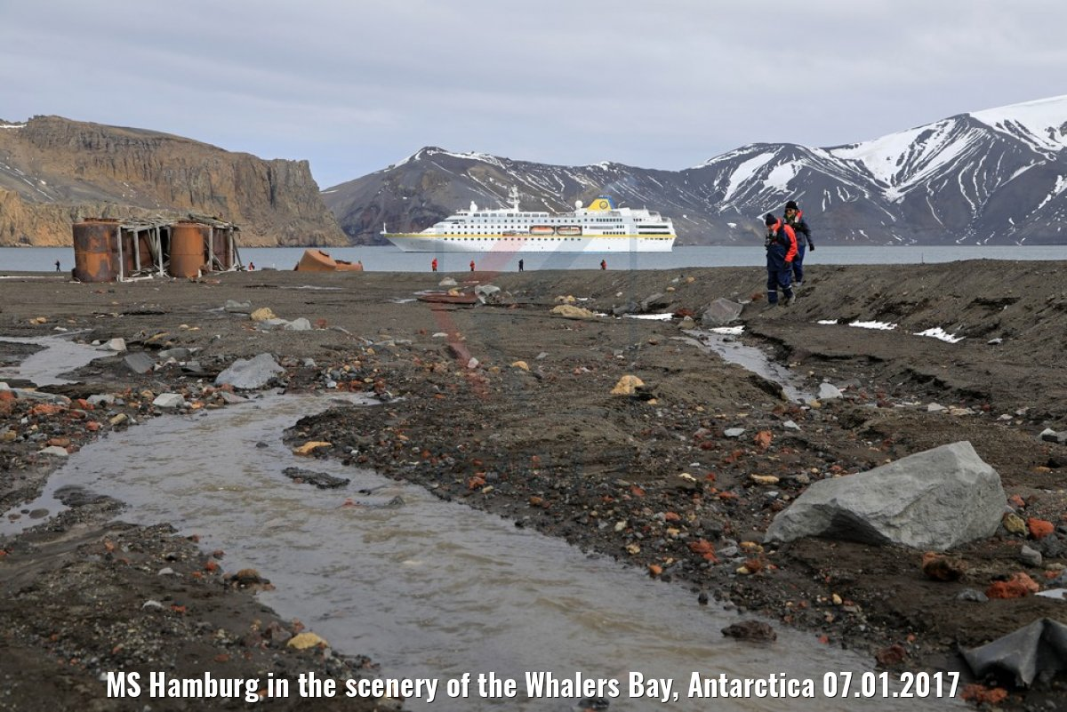 MS Hamburg in the scenery of the Whalers Bay, Antarctica 07.01.2017