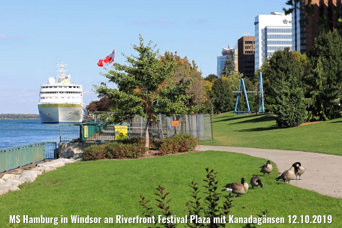 MS Hamburg in Windsor an Riverfront Festival Plaza mit Kanadagänsen 12.10.2019