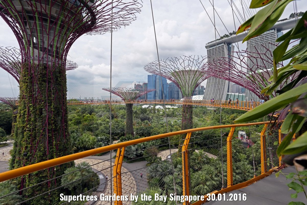 Supertrees Gardens by the Bay Singapore 30.01.2016