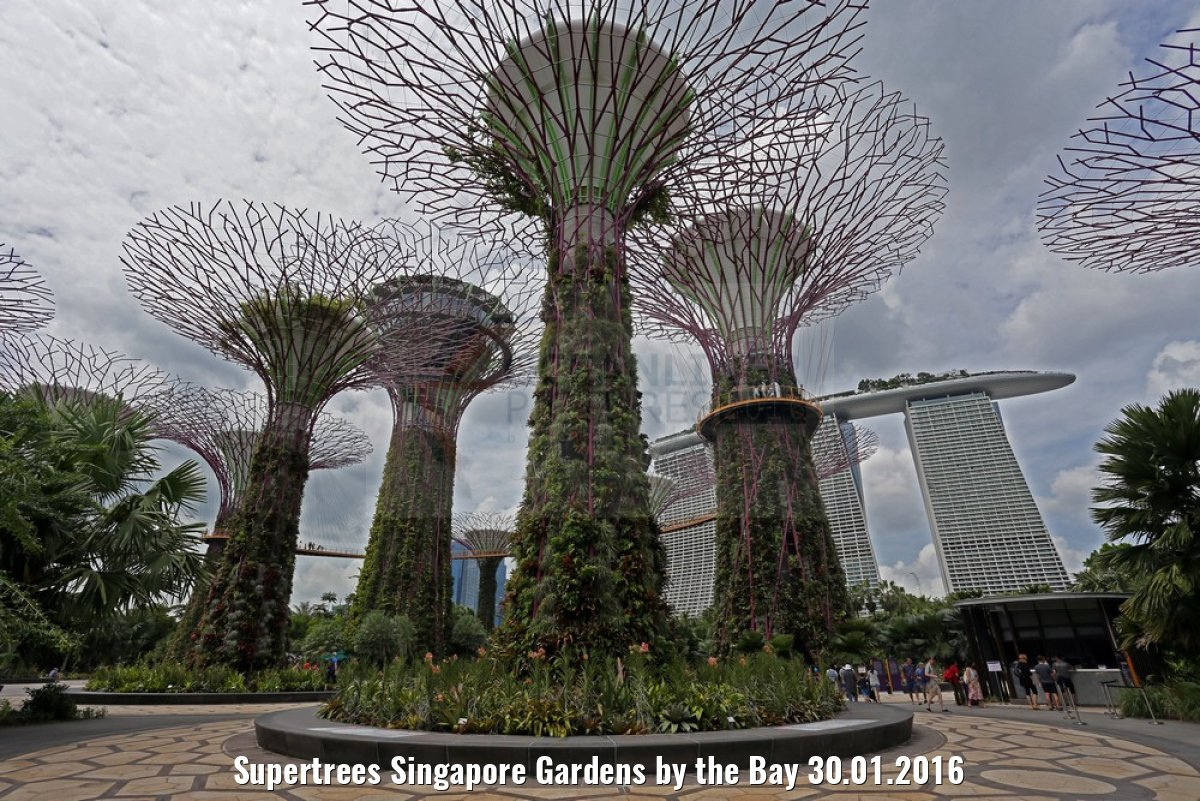 Supertrees Singapore Gardens by the Bay 30.01.2016